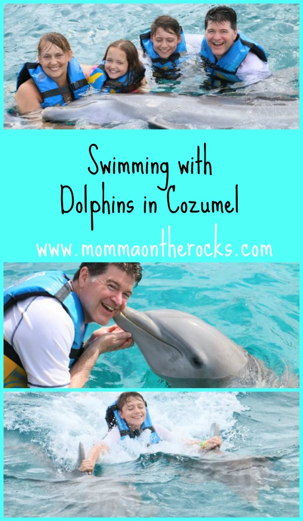 Swimming With Dolphins In Cozumel Momma On The Rocks